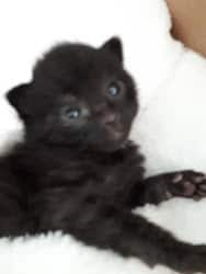 Cubby at 1 week of age